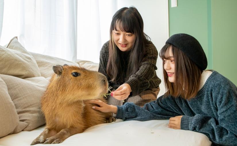 Capybara café